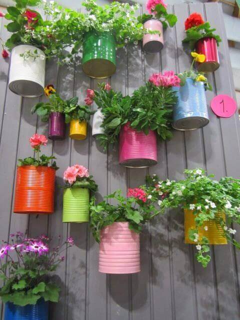 Hanging Pot Plants